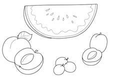 Albaricoque, peache, sandía, ciruelo ilustración del vector