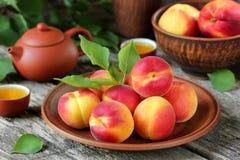 Albaricoque perfecto de la fruta Imagen de archivo libre de regalías
