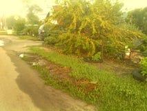 Albaricoquero cerca del camino con las frutas fotografía de archivo