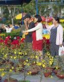 Albaricoquero vietnamita de la compra de las mujeres en flor Fotografía de archivo
