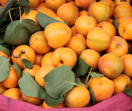 albaricoques Foto de archivo libre de regalías