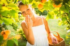 Albaricoques de la cosecha de la mujer bonita, joven encendidos imagen de archivo libre de regalías