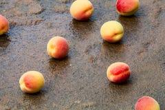 Albaricoques en la piedra mojada Fotos de archivo libres de regalías