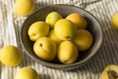 Albaricoques orgánicos amarillos crudos de Angelcot Fotos de archivo