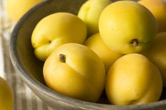 Albaricoques orgánicos amarillos crudos de Angelcot Fotografía de archivo