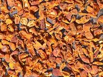 Albaricoques secados secados en el sol Imagen de archivo
