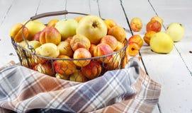 Albaricoques y manzanas frescos sabrosos maduros en cesta tejida del metal Fotos de archivo libres de regalías