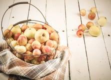 Albaricoques y manzanas frescos sabrosos maduros en cesta tejida del metal foto de archivo libre de regalías