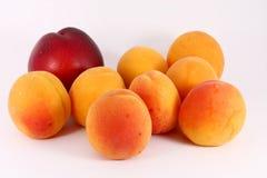 Albaricoques y nectarina Foto de archivo libre de regalías