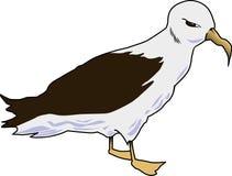 Albatros 001 Photos libres de droits