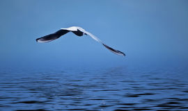 Albatros Imagen de archivo