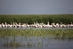 albatros obrazy stock