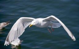 Albatros imagens de stock