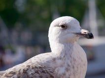 Albatros imagens de stock royalty free
