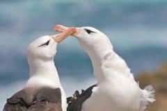 Albatros auf dem Strand Lizenzfreie Stockfotos