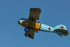 Albatros D Reproducción del Va Imagen de archivo