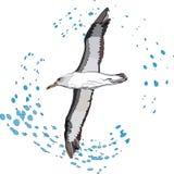 Albatros de vol Image stock