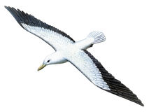 Albatros del pájaro foto de archivo