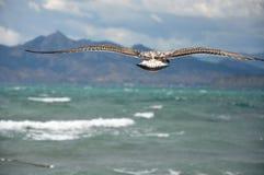 Albatros, der weg zum Meer auf einem Hintergrund der Berge fliegt. Stockbild