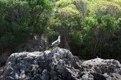 Albatros en orilla Imagen de archivo