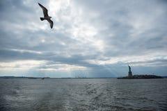 Albatros y la estatua de la libertad New York City, NY, U S Foto de archivo
