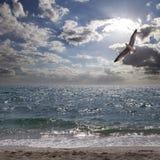 Albatros y mar del Caribe Foto de archivo libre de regalías