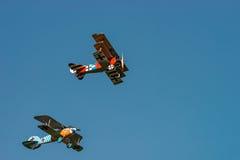 Albatrosa d Va reprodukcja Zdjęcie Royalty Free