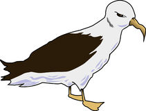 Albatross 001 Royalty Free Stock Photos