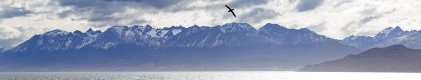 Albatross flying over the Beagle Channel, Patagonia stock photo
