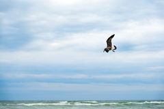 Albatross flying over dark ocean Stock Photography