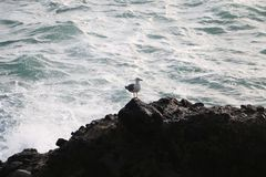 Albatross stock photos
