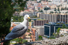 Albatross in Monte Carlo Royalty Free Stock Photos