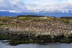 Albatrosskoloni i Ushuaia Royaltyfri Fotografi