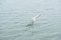 Albatroz em voo sobre o mar foto de stock royalty free