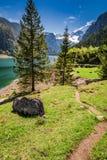 Albeggi nel lago della montagna in Gosau, le alpi, Austria, Europa Fotografie Stock Libere da Diritti