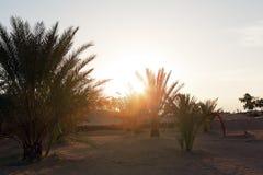 Albeggi in un'oasi del deserto sabbioso delle palme da datteri del Sahara Fotografia Stock Libera da Diritti