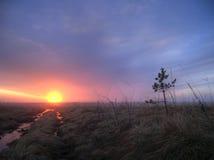 Albeggia un campo nebbioso in molla in anticipo Fotografia Stock Libera da Diritti