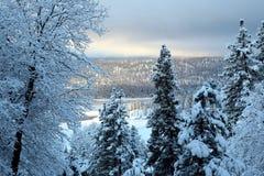 Albeggiare freddo di giorno Fotografia Stock