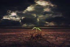 Alberello che cresce sulla terra all'incrinato asciutto a terra Fotografie Stock Libere da Diritti