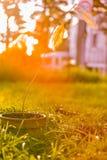 Alberello morto dell'albero con le foglie in vaso da fiori contro backgr luminoso immagine stock libera da diritti