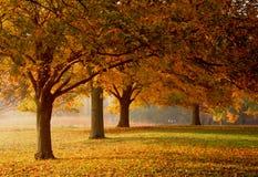alberi Fotografia Stock