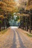 alberi Fotografie Stock Libere da Diritti