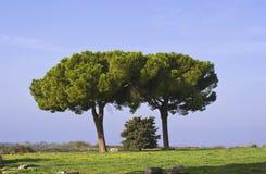 alberi Immagine Stock