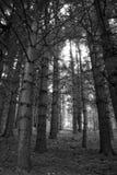 alberi Fotografia Stock Libera da Diritti