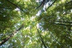 alberi Fotografie Stock