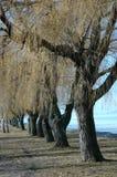alberi Immagini Stock