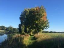 Alberi accanto al lago vicino a Coggeshall in Essex fotografia stock libera da diritti