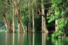 Alberi in acqua Fotografia Stock Libera da Diritti