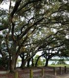 Alberi ad un parco a Pensacola fotografia stock libera da diritti