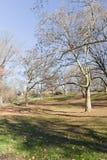 Alberi al Central Park Fotografie Stock Libere da Diritti